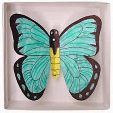 Boxed Butterfly