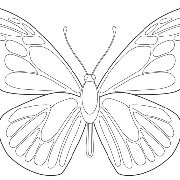 Free Butterfly Download