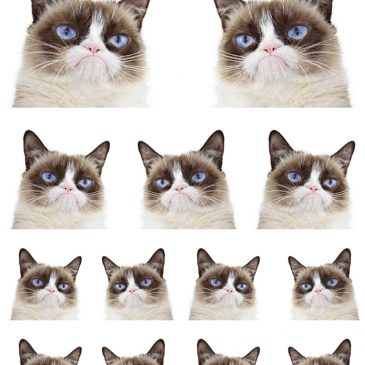Grumpy Cat Heads