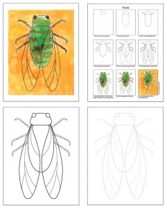 insects to draw