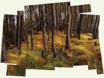 David Hockney Photo Collage