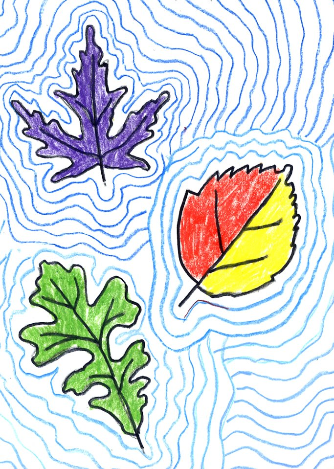 Contour Line Drawing Leaves : Contour leaf drawings art projects for kids