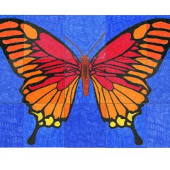 butterfly pictures to color