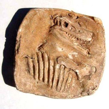 Make a Dinosaur Fossil