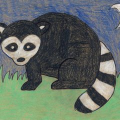 Draw a Raccoon