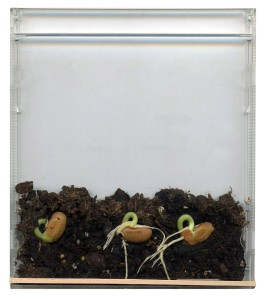 CD Seeds Day 5 Post