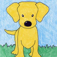draw a labrador dog