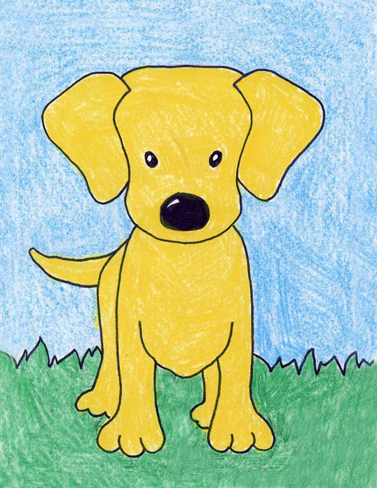 draw a labrador dog