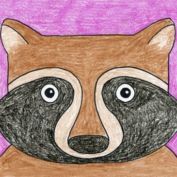 Draw a Raccoon Face