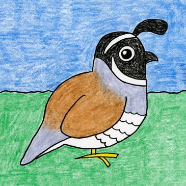 Draw the California Quail State Bird