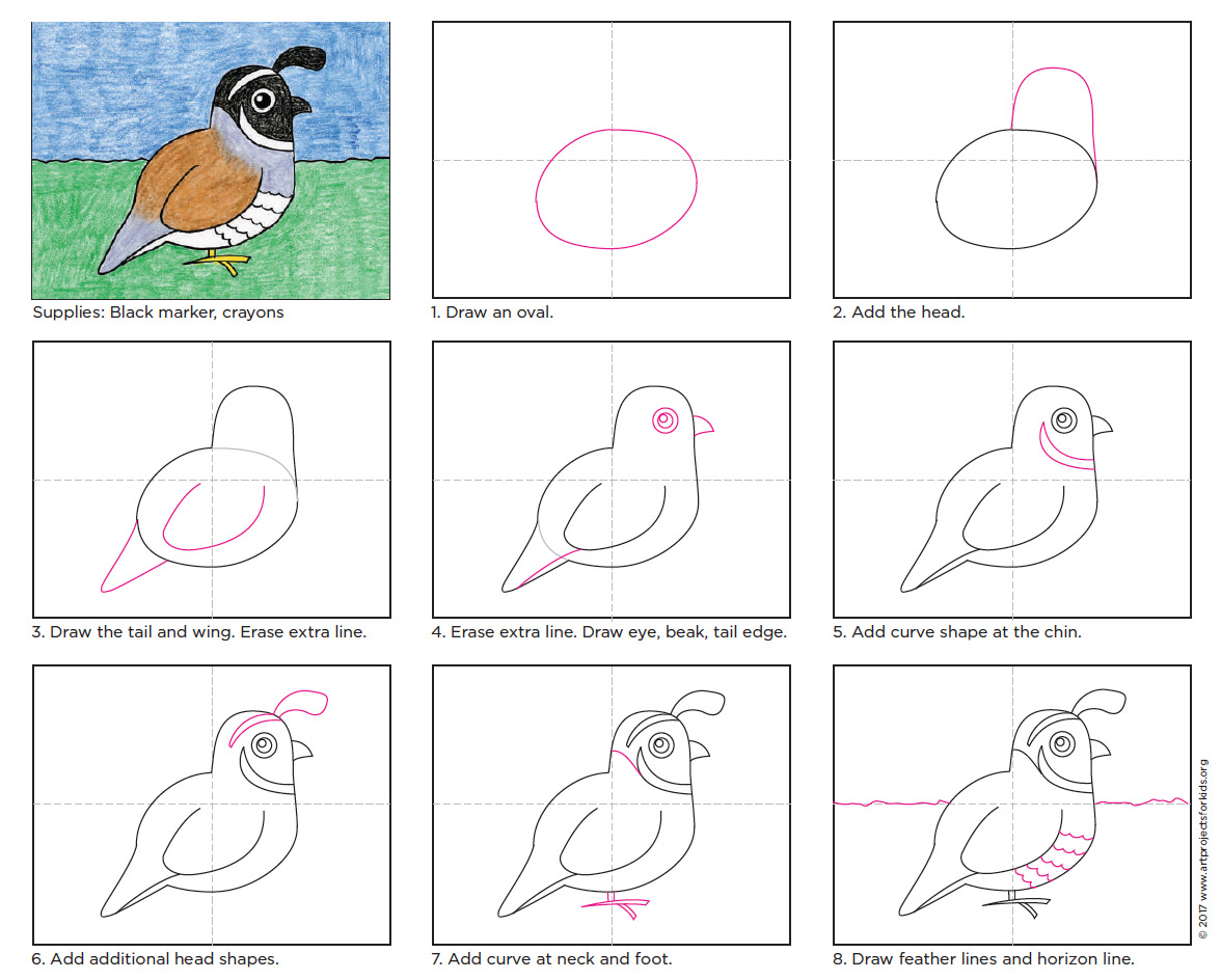 draw the california quail state bird art projects for kids