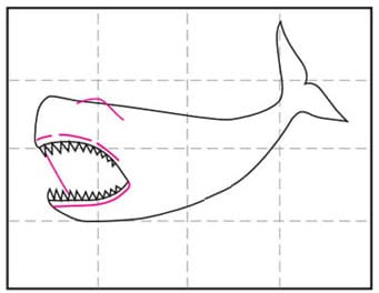 How to Draw a Megalodon Shark