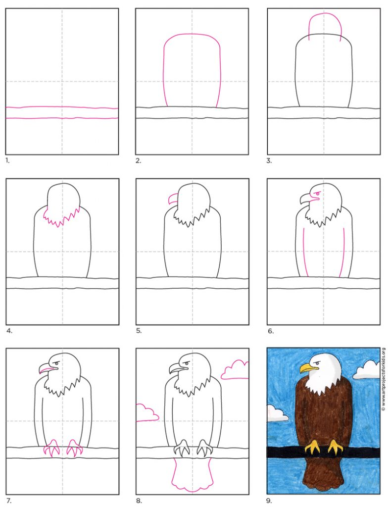 This image has an empty alt attribute; its file name is Bald-Eagle-diagram-784x1024.jpg