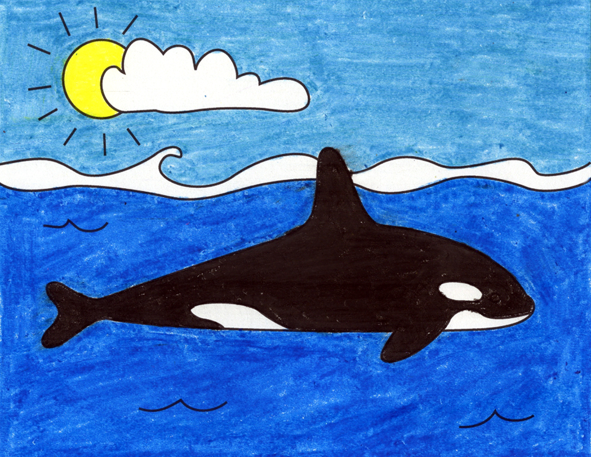 How To Draw A Killer Whale Art Projects For Kids