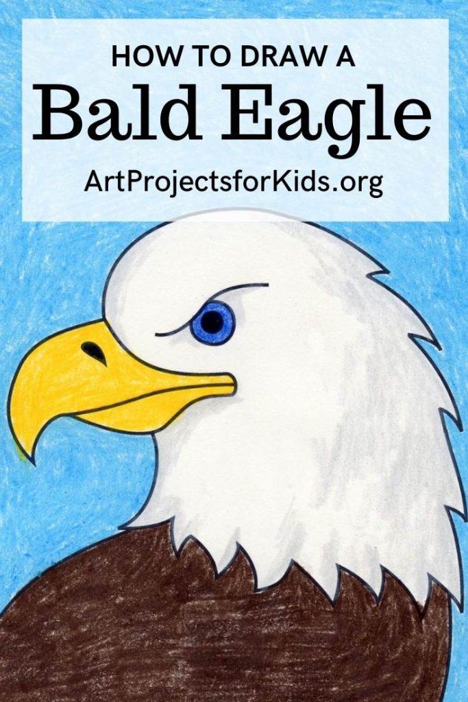 How to Draw a Bald Eagle Head