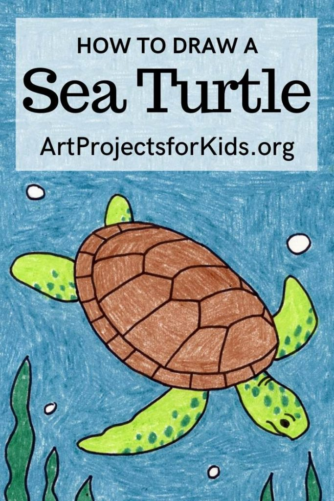 draw a sea turtle step by step