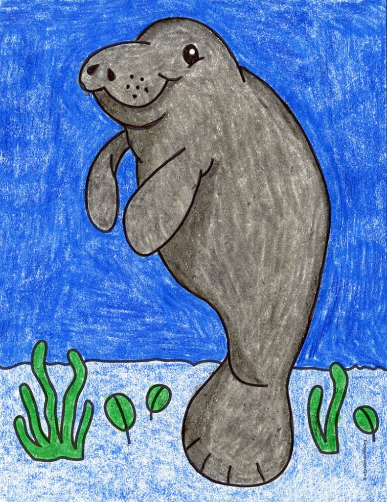 how-to-draw-a-manatee